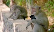 Bầy khỉ xã hội đen trên đảo Bali