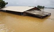 Hà Nội: Vỡ đê sông Bùi, nước ngập gần nóc nhà