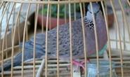 Mang thuốc độc đến nhà dọa rồi xin đểu 2 con chim để đòi nợ