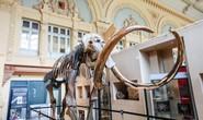 Xương voi ma mút được bán hơn nửa triệu USD