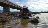 Săn hàu dưới chân cầu Nhơn Hội, TP Quy Nhơn