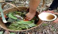 Rau bép: Đặc sản núi rừng