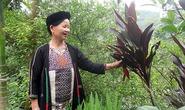 Kỳ bí bài thuốc sinh lý của 1 phụ nữ người Dao