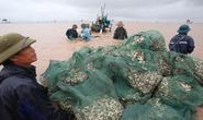 Cận cảnh bắt hàng trăm tấn ngao ở biển Tiền Hải