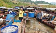 Mỏi tay bắt cá trên sông Đà