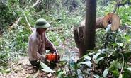 Phú Yên rút kinh nghiệm vụ chặt cây rừng giao đất nuôi bò