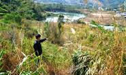 Thủy điện vẫn lăm le phá rừng