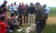 Vỡ hồ chứa bùn thải, cá chết hàng loạt