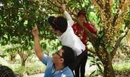 Vào mùa trái cây, du lịch miệt vườn hút khách