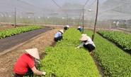 Phân bón hữu cơ chậm đón đầu thị trường