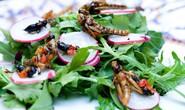 Ăn côn trùng để... cứu trái đất