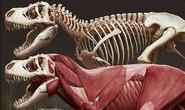 Tiết lộ gây sốc về khủng long bạo chúa