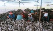 Kiến nghị xuất khẩu khoai lang chính ngạch sang Trung Quốc