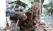 Bão số 9 quần thảo ở Vũng Tàu thổi bay cổ thụ 100 tuổi và cột điện