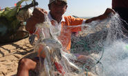 VIDEO: Làng chài Phước Hải trúng mẻ cá lớn sau bão số 9
