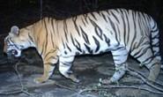 Ấn Độ: Tranh cãi vụ bắn chết hổ ăn thịt 12 người