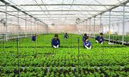 Đối tượng nào được sang Hàn Quốc làm việc ở lĩnh vực nông nghiệp