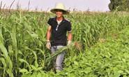 Tiến sĩ rủ nhau về quê làm nông nghiệp organic