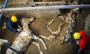 Bí ẩn ngựa đá từng có sự sống trong hầm mộ 2.000 năm