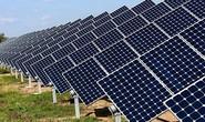 Thiếu lưới truyền tải, vẫn phê duyệt thêm dự án điện mặt trời