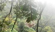 'Sởn gai ốc' thấy cảnh đạp rừng săn lan hiếm bán Tết