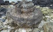 Ngắm khu nghĩa địa san hô hóa thạch 6 ngàn năm tuổi trên đảo Lý Sơn