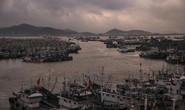 Tàu cá Trung Quốc lộng hành (*): Vét cạn biển Tây Phi