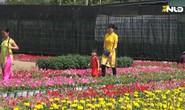 Ngàn hoa Sa Đéc chuẩn bị ra thị trường Tết Mậu Tuất 2018