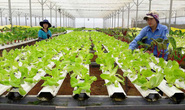 TP HCM: 38 tỉ đồng đào tạo nghề cho lao động nông thôn