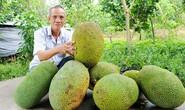 Mít Thái tiếp tục tăng giá kỷ lục