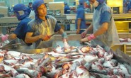 Lý do giúp cá tra tăng giá kỷ lục từ trước đến nay