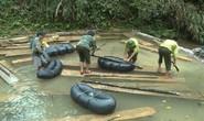 Phát hiện vụ xẻ thịt rừng phòng hộ lớn nhất tỉnh Quảng Bình