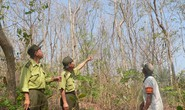 Nắng nóng đe dọa rừng ĐBSCL