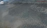 Bầy chim cánh cụt khổng lồ trên quần đảo Nguy Hiểm