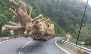 Cục C67: Chưa đủ cơ sở quy kết CSGT bảo kê xe chở cây quái thú lọt qua 19 tỉnh