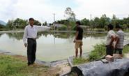 Trại heo xả thải xuống hồ cấp nước!