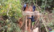 Công an tỉnh tham gia điều tra vụ thảm sát rừng lim cổ thụ