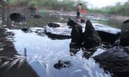 Không tìm ra thủ phạm chính vụ cá chết trắng sông Bàu Giang