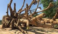 Phó Thủ tướng yêu cầu làm rõ xe chở cây quái thú có vi phạm luật không