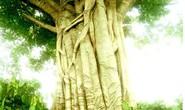 Vụ cây quái thú: Phó chủ tịch xã ký bừa