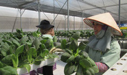 Kỳ vọng lớn vào chuỗi thực phẩm an toàn