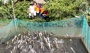 Du khách kéo ra cồn giữa sông Hậu xem cá lóc bay