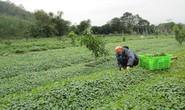 Nông nghiệp hữu cơ không chỉ có sạch