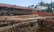 Vụ trùm gỗ lậu Phượng râu: Làm rõ trách nhiệm cán bộ