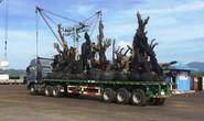 Nhiều cây tiểu quái thú đi bằng đường thủy ra Bắc