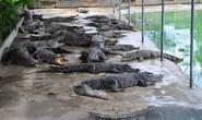Người nuôi cá sấu được cứu