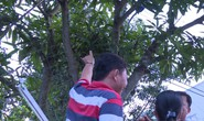 Công nhân bị điện giật tử vong, thi thể treo lơ lửng trên cây