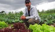 Người Brazil chung tay giúp nông dân organic