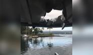 """Hawaii: Hơn 20 du khách bị thương vì """"bom dung nham"""""""