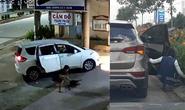 [Video] Dùng xe hơi để đi trộm chó và cây cảnh